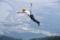 京都新聞写真コンテスト 飛んで飛んで飛んで!