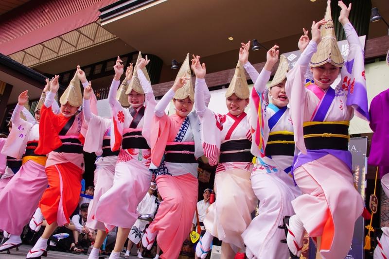 京都新聞写真コンテスト 踊る阿呆に撮る阿呆