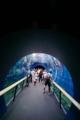 京都新聞写真コンテスト 水生の世界へ