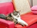 [ねこ][群馬]仲良し猫