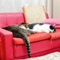 [ねこ][群馬]おやすみ猫