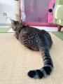 [ねこ][群馬]拗ねた猫