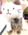 [ねこ][猫][群馬]新入りとスカちゃん