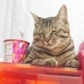 [ねこ][猫][群馬]空腹とじゃがりこ