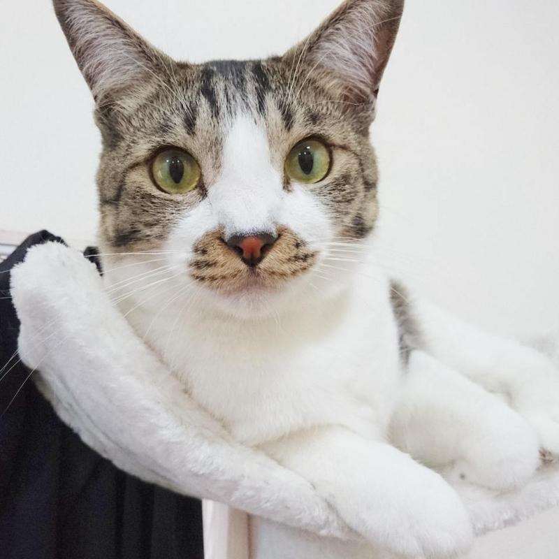 おすまし猫猫