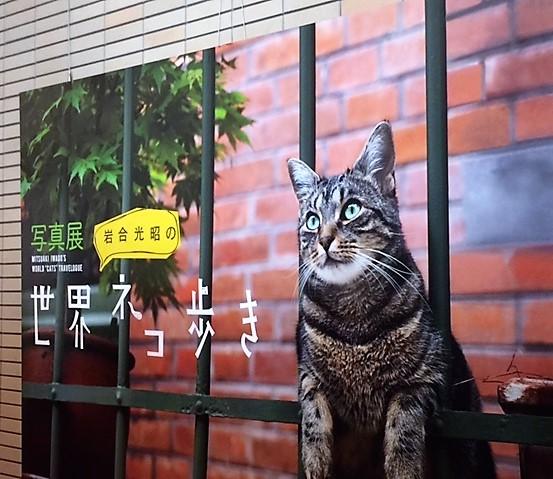 f:id:maru-piyoko:20170715225404j:plain