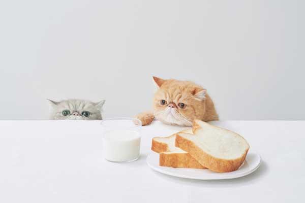 SNSで密かなブーム到来!?ねこねこ食パンの福袋がでますよ~!