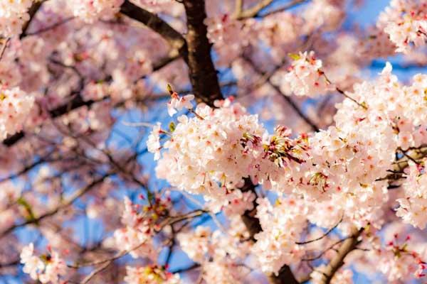 春のめまいや不眠・・これが「恋」なら何も文句はないんですけどね・・(笑)