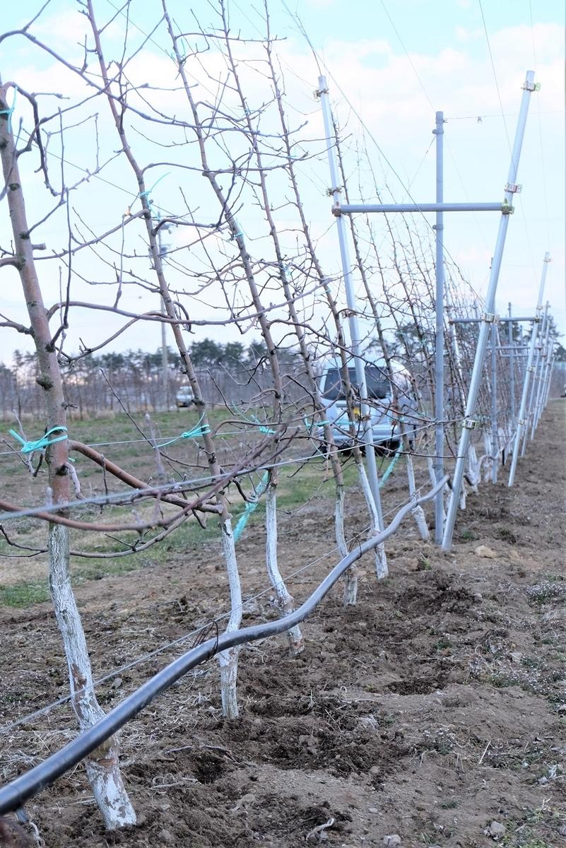 Shinsyu Azumino maruchan orchard