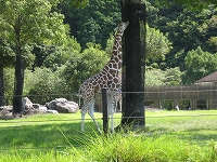 s-zoo 002