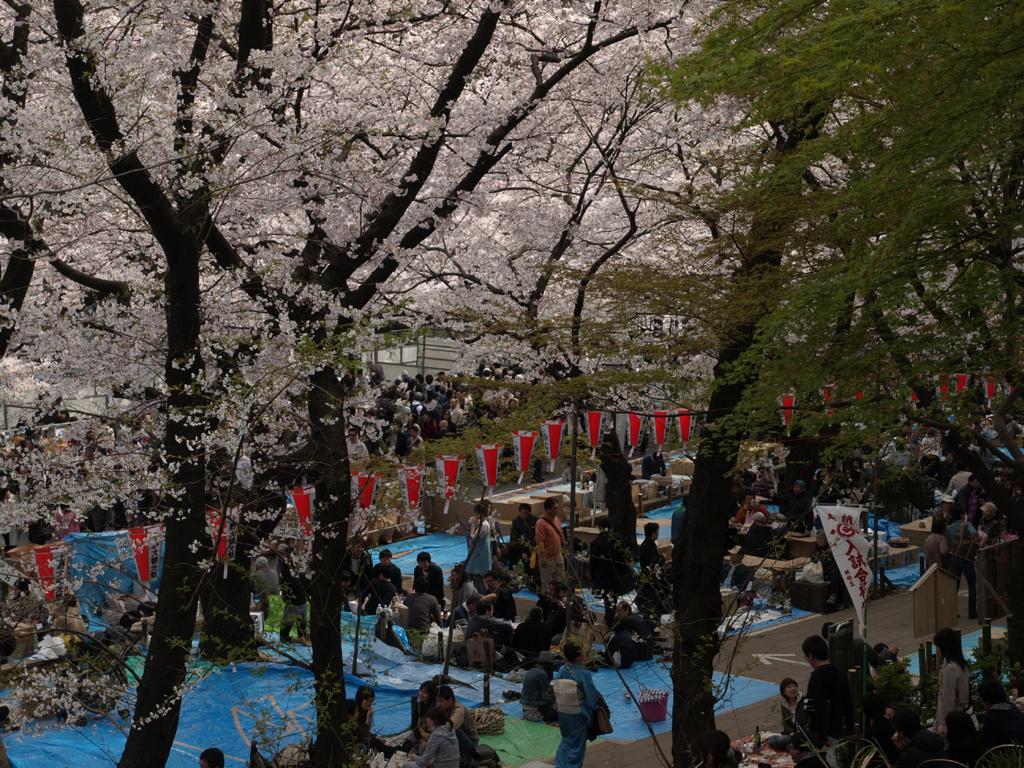 桜満開の公園