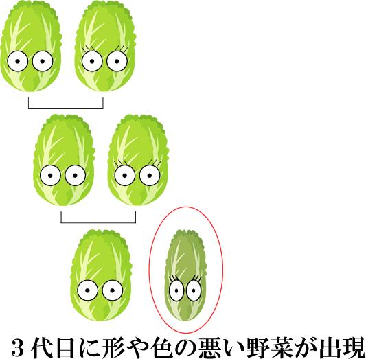 遺伝子組み換えの野菜