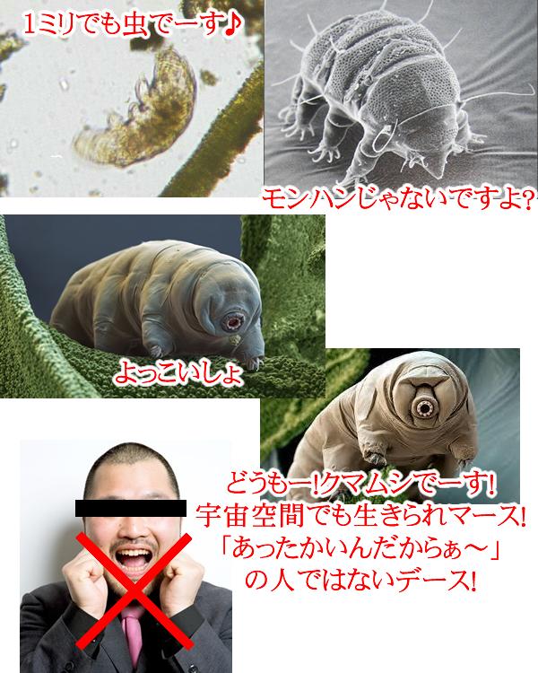 微生物ミジンコ・クマムシ等