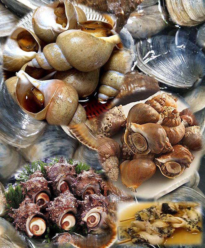 つぶやサザエの貝類