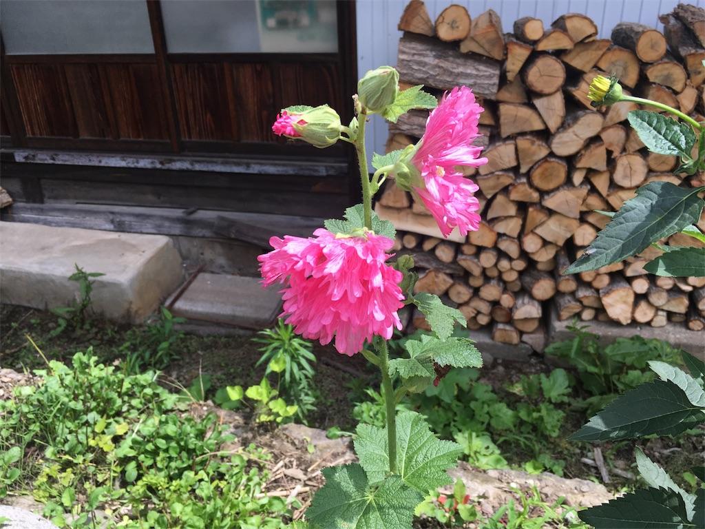f:id:marukochikiokoshi:20170710113756j:image