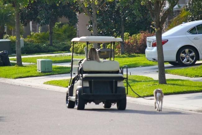 車で犬を散歩させる怠け者の画像