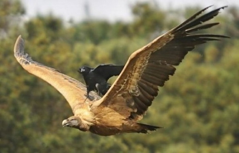 鳥の上に乗る鳥の画像