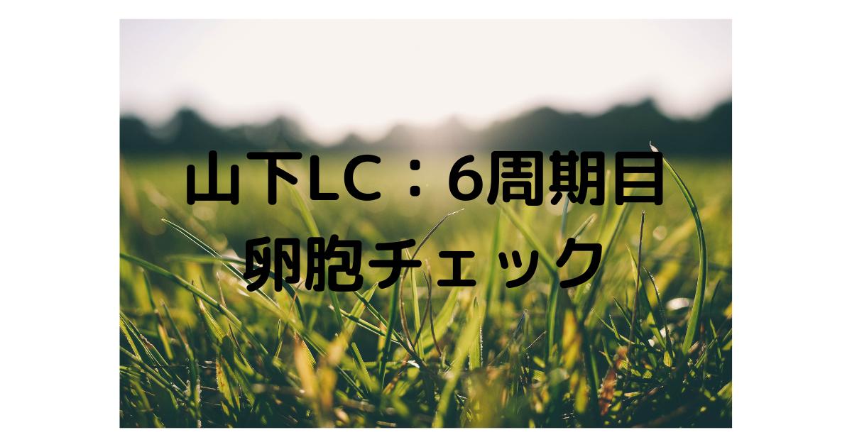 f:id:marumarutowatashi06:20210408165651p:plain