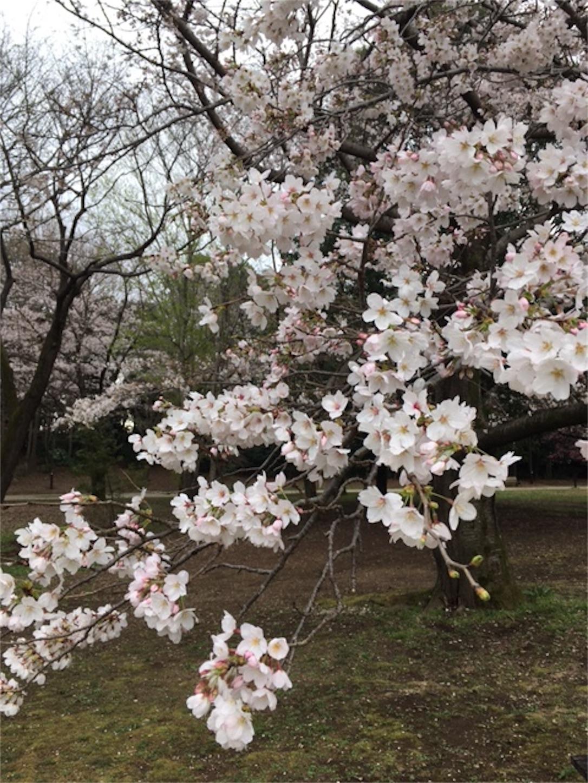 f:id:marutetsukitachiba:20210324173144j:image