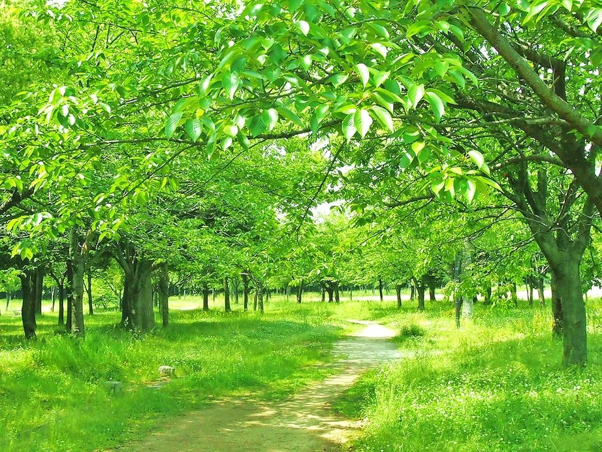 森の中の明るい道,新緑