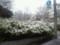 東京で降雪再び。。。