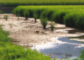京都新聞写真コンテスト 田圃の風景
