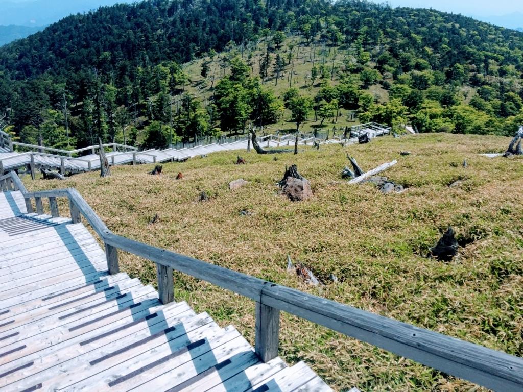 大台ヶ原のミヤコザサ