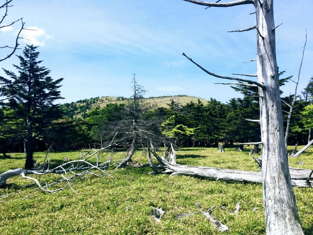 大台ヶ原の枯れトウヒ