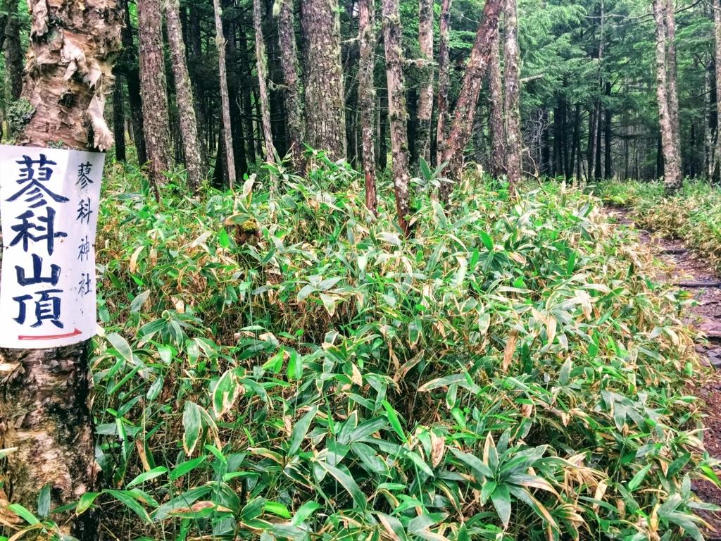 蓼科山登山口すぐの樹林帯
