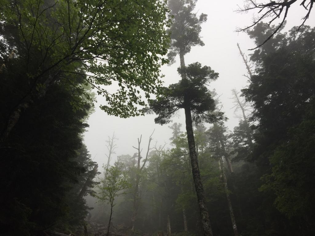 蓼科山の登り
