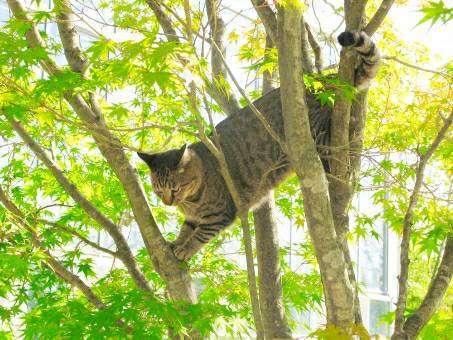 木の上にいる猫