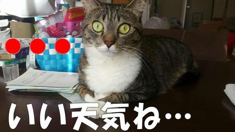 無反応でこちらを見つめる猫