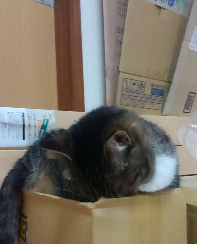顔を埋めて眠る猫