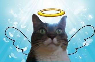 天使の羽と輪がついてる猫