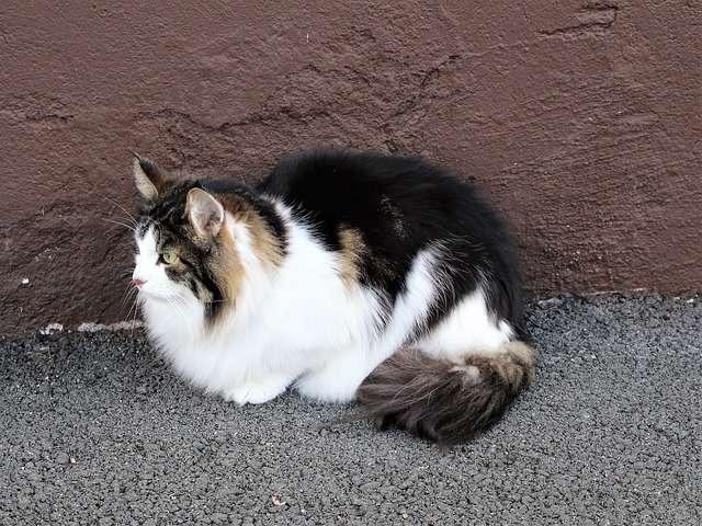 猫 神様 世界 日本 海外