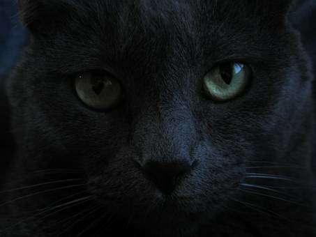 黒猫のアップ写真
