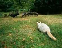 狩りをするネコ