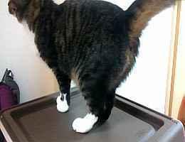 ネコの写真