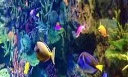 水族館のイメージ