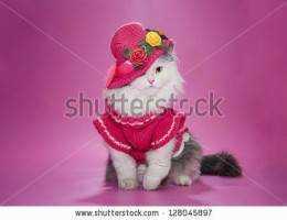 仮装した猫の写真