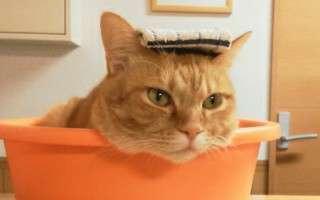 洗面器に入った猫