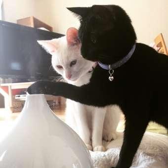 加湿器が気になる2匹の猫