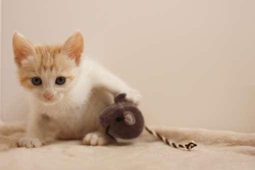 猫 ねずみ 持ってくる