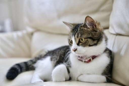 ソファでくつろぐ猫の写真