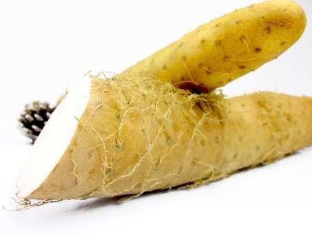 山芋 長芋 大和芋 自然薯