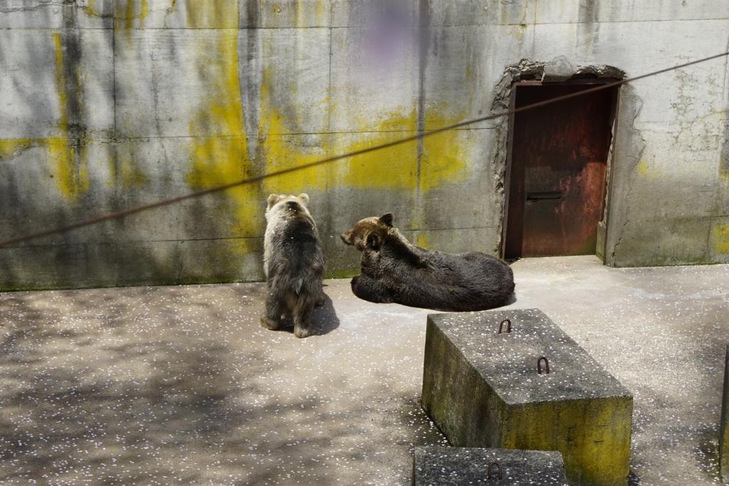 芦野公園のヒグマ