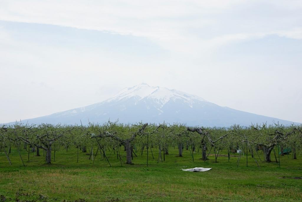 りんご畑と岩木山