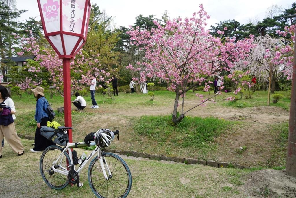 いちおう弘前の桜