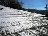 茶畑(和束町)