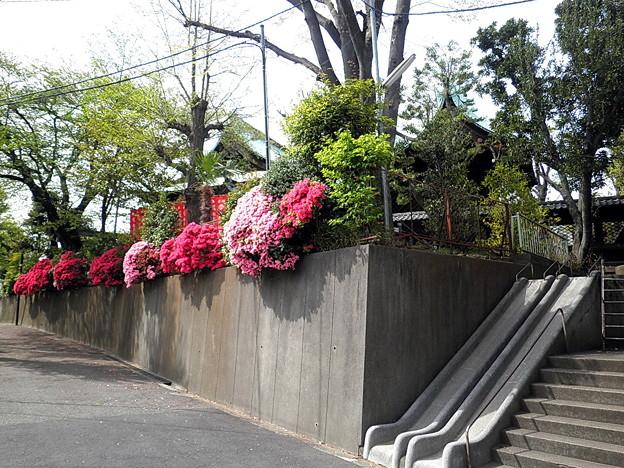 f:id:masahirokimu06:20170308154710j:plain